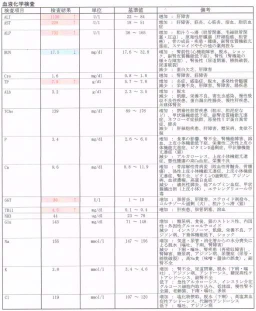 健康診断 ガルシア動物病院 江東区辰巳 豊洲・東雲・潮見 ...